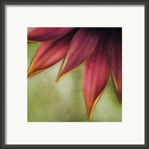 Petals Framed Print By Bonnie Bruno