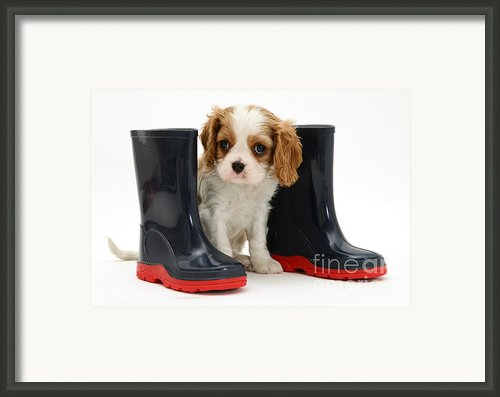 Puppy With Rain Boots Framed Print By Jane Burton