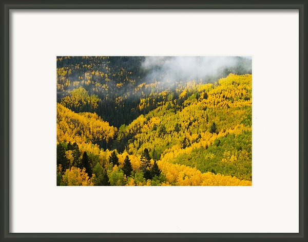 Quaking Aspen And Ponderosa Pine Trees Framed Print By Ralph Lee Hopkins