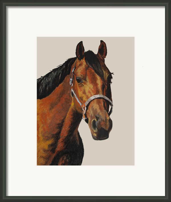 Quarter Horse Framed Print By Ann Marie Chaffin