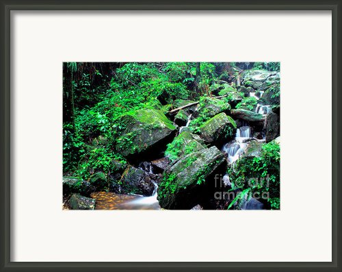 Rainforest Waterfall Framed Print By Thomas R Fletcher
