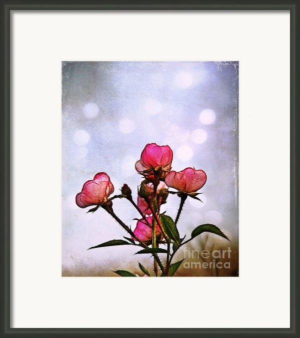 Reaching For The Light Framed Print By Judi Bagwell