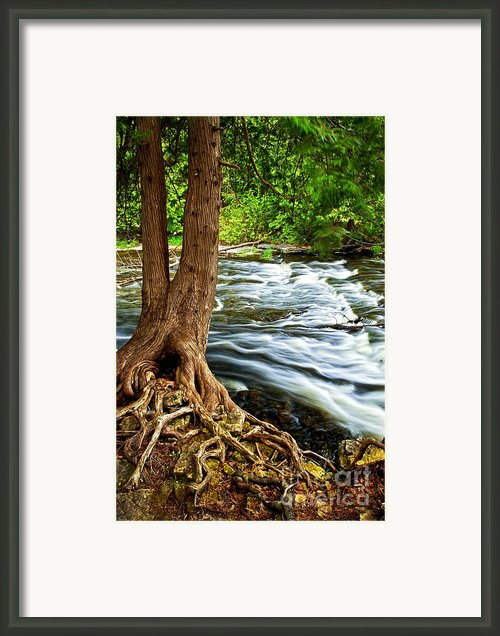 River Through Woods Framed Print By Elena Elisseeva