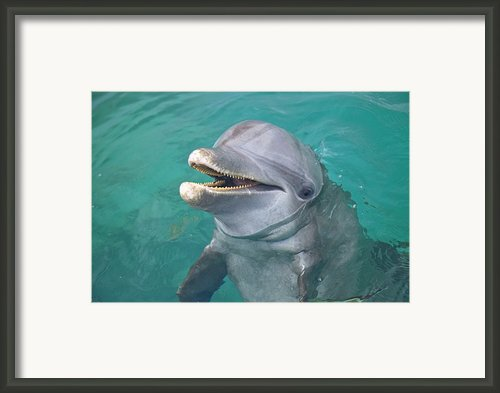 Roatan, Bay Islands, Honduras A Framed Print By Stuart Westmorland