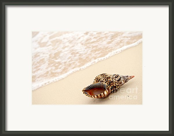 Seashell And Ocean Wave Framed Print By Elena Elisseeva