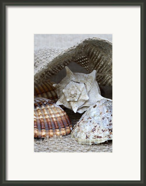 Seashells Framed Print By Frank Tschakert