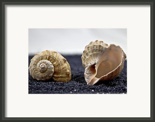 Seashells On Black Sand Framed Print By Joana Kruse
