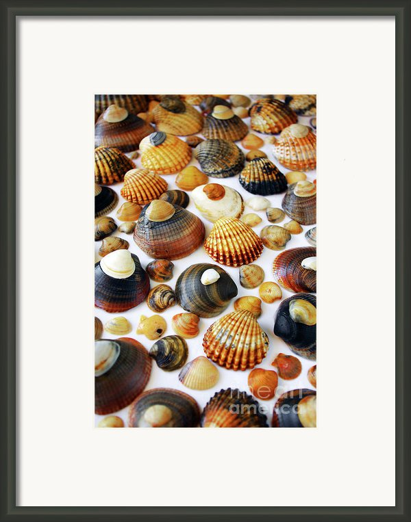 Shell Background Framed Print By Carlos Caetano