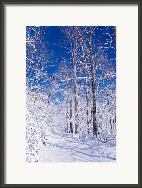 Snowy Path Framed Print By Rob Travis
