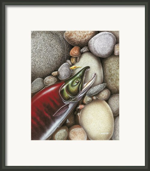 Sockeye Salmon Framed Print By Jq Licensing