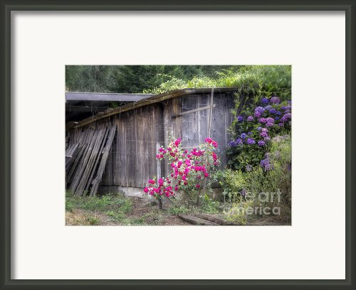 Somewhere Near Geyserville Ca Framed Print By Joan Carroll