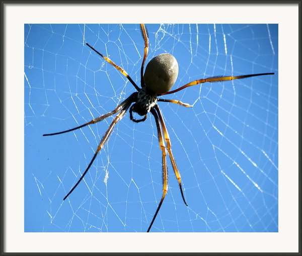 Spider Framed Print By Joyce Woodhouse
