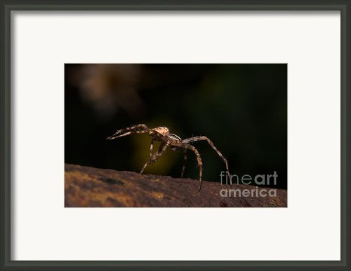 Spider Framed Print By Odon Czintos