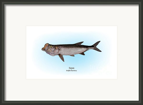 Tarpon Framed Print By Ralph Martens