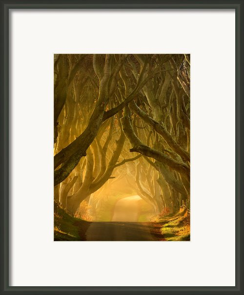 The Dark Hedges Iii Framed Print By Pawel Klarecki