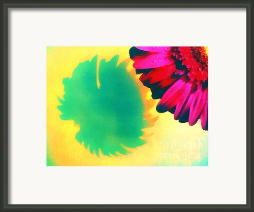 The Gerbera Framed Print By Odon Czintos
