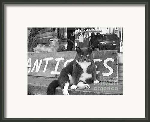 The Shop Cat Framed Print By Tam Ishmael - Eizman