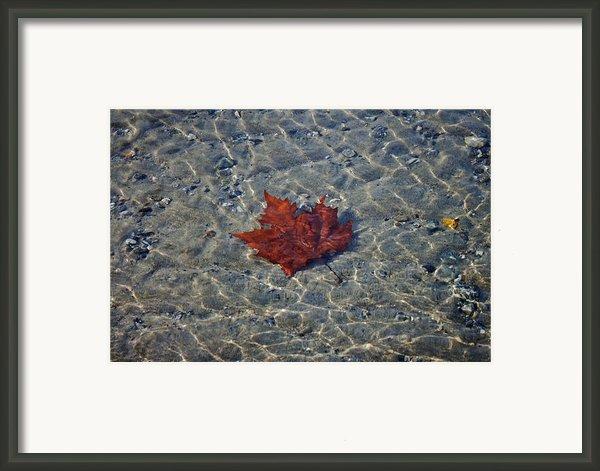 Under Water Framed Print By Joana Kruse