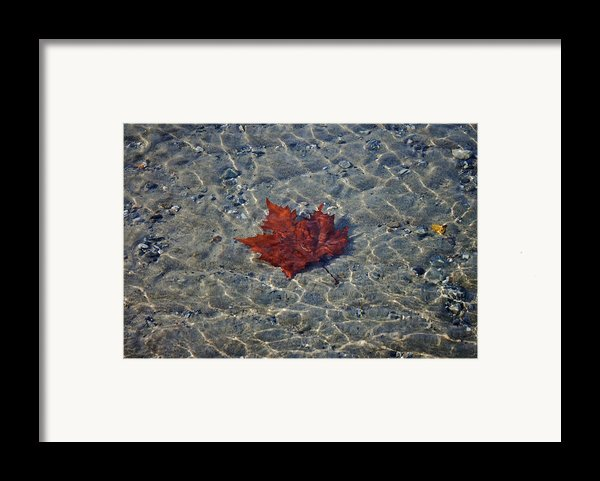 Under Water Framed Print By Joana Kruse