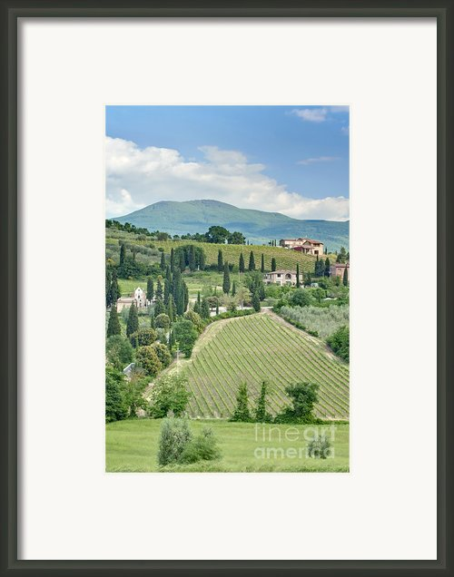 Vineyards On A Hillside Framed Print By Rob Tilley
