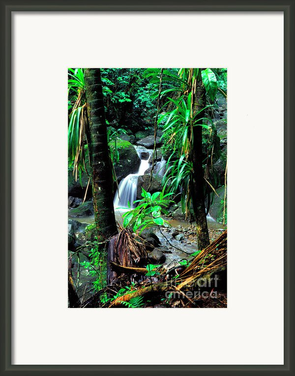 Waterfall El Yunque National Forest Framed Print By Thomas R Fletcher