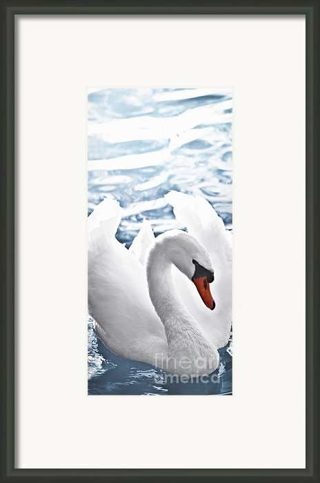 White Swan On Water Framed Print By Elena Elisseeva