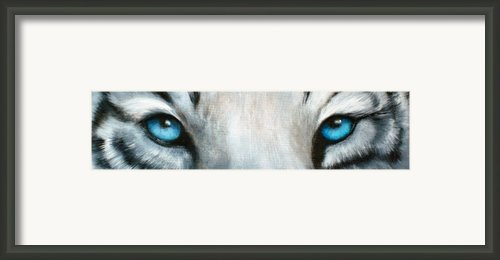Whos Watching Who...white Tiger Framed Print By Darlene Richardson