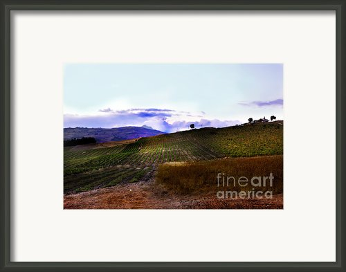 Wine Vineyard In Sicily Framed Print By Madeline Ellis