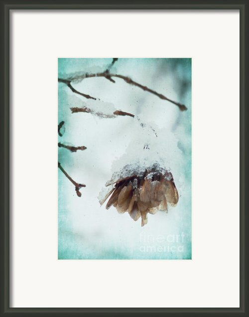 Wintertime Framed Print By Angela Doelling Ad Design Photo And Photoart