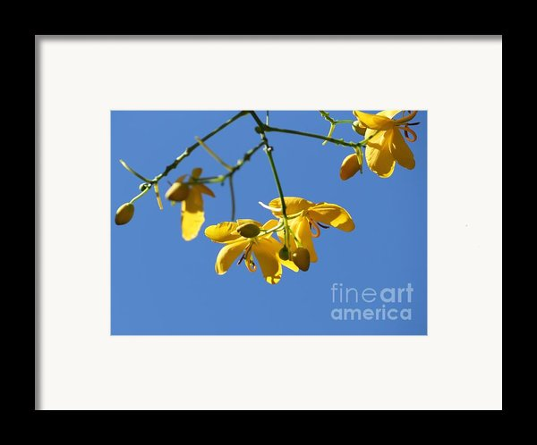 Yellow And Blue Framed Print By Theresa Willingham