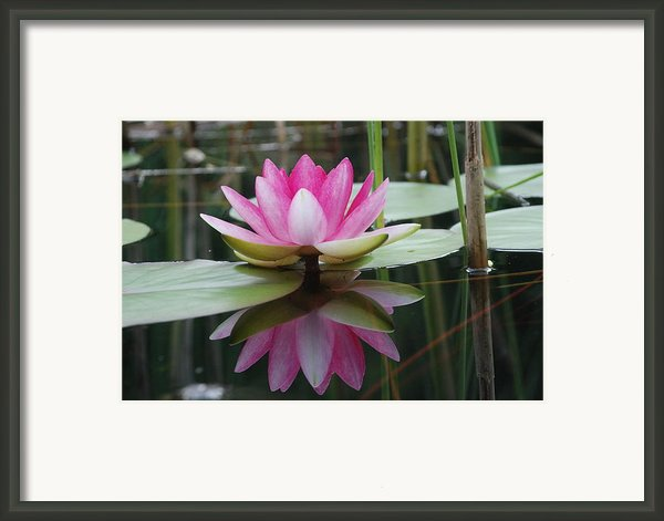 Your Majesty Framed Print By Alla Dickson