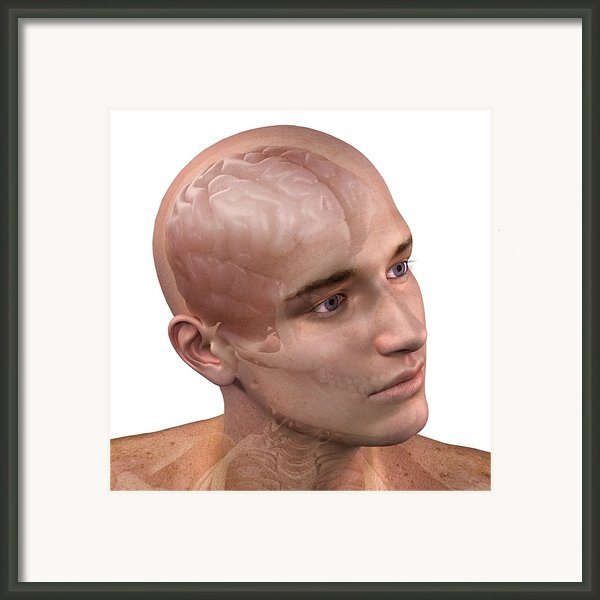 Head Anatomy, Artwork Framed Print By Sciepro