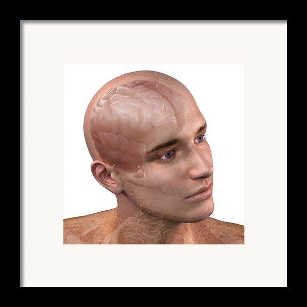 Head Anatomy, Artwork Framed Print By Sciepro