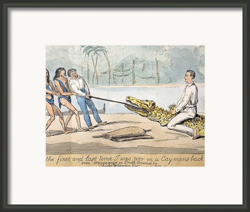 1826 Naturalist Charles Waterton & Caiman Framed Print By Paul D Stewart