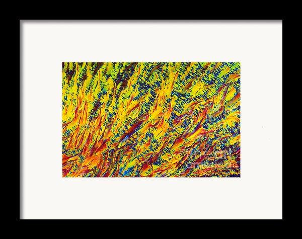 Adenosine Triphosphate Framed Print By Michael W. Davidson