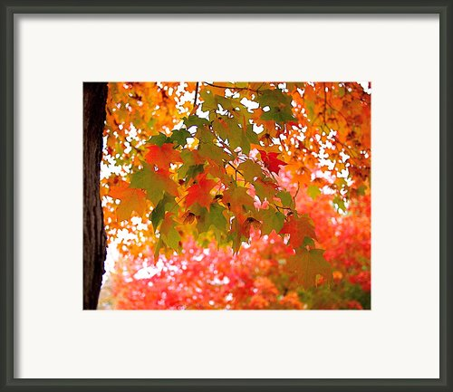 Autumn Leaves Framed Print By Rona Black