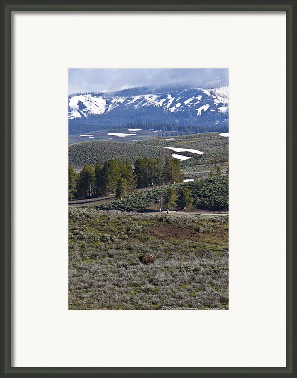 Beaver Pond Trail Framed Print By Charles Warren