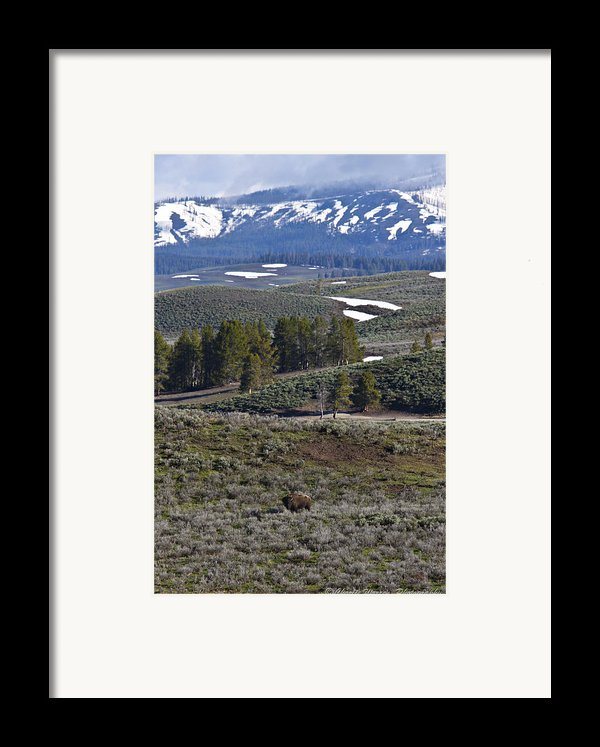 Beaver Pond Trail Framed Print By Charles Warren