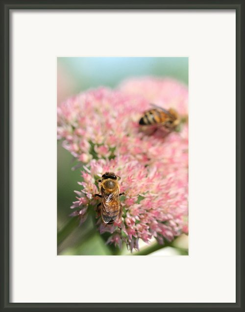 2 Bees Framed Print By Angela Rath