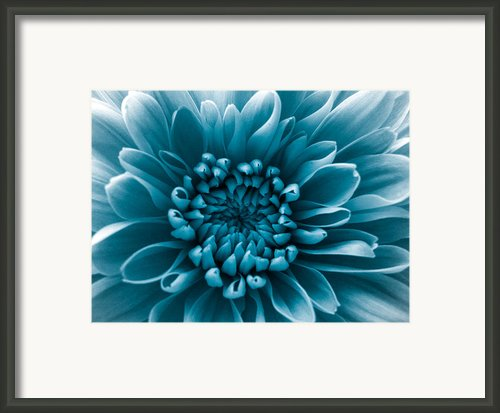 Blue Flower Framed Print By Dawn Oconnor