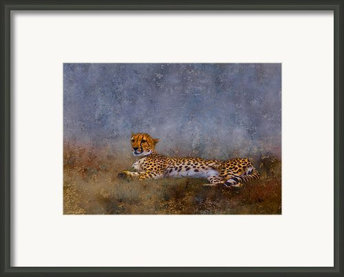 Cheetah Framed Print By Ron Jones