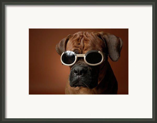 Dog Wearing Sunglasses Framed Print By Chris Amaral
