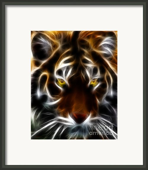 Eye Of The Tiger Framed Print By Wingsdomain Art And Photography