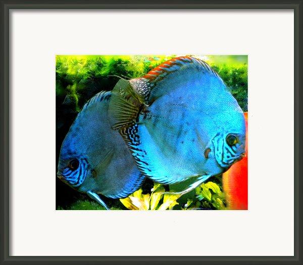 2 Fish Friends Swimming In The Danish Water  Framed Print By Colette V Hera  Guggenheim