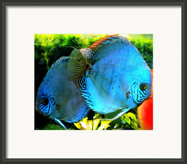 2 Fish Friends Swimming In The Danish Water  Framed Print By Colette V Hera  Guggenheim