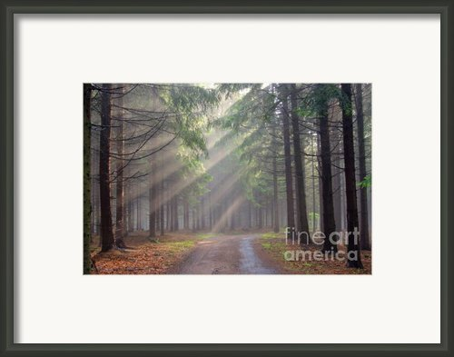 God Beams - Coniferous Forest In Fog Framed Print By Michal Boubin