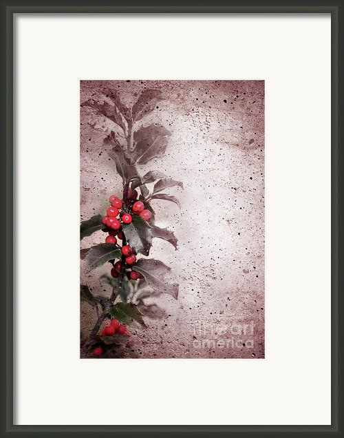 Holly Branch  Framed Print By Carlos Caetano