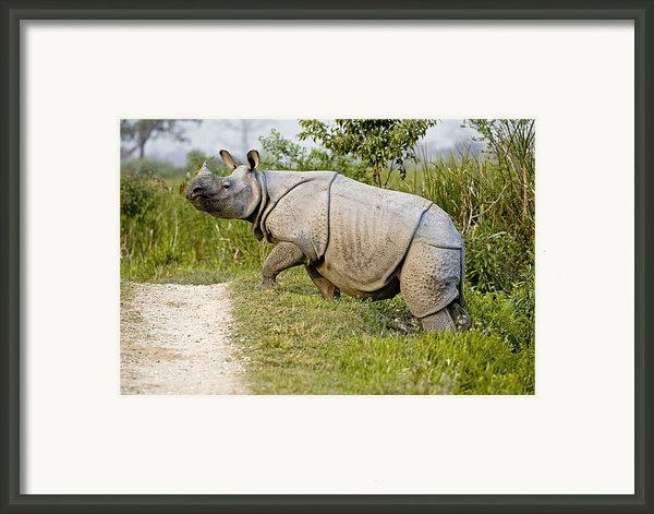 Indian Rhinoceros Framed Print By Tony Camacho