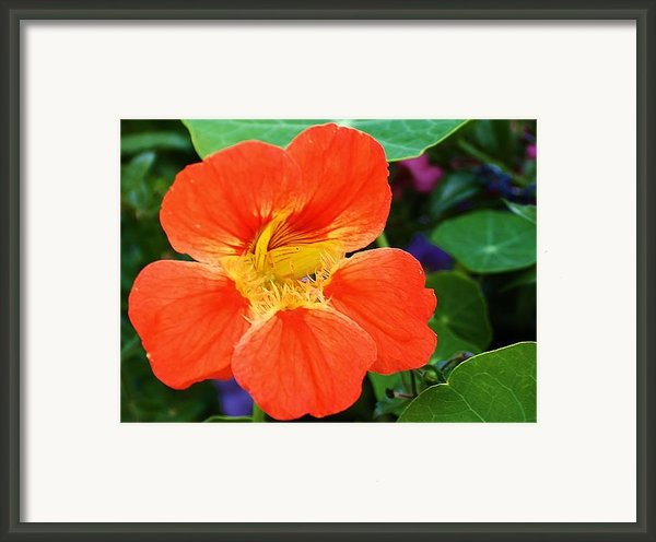 Orange Delight Framed Print By Bruce Bley