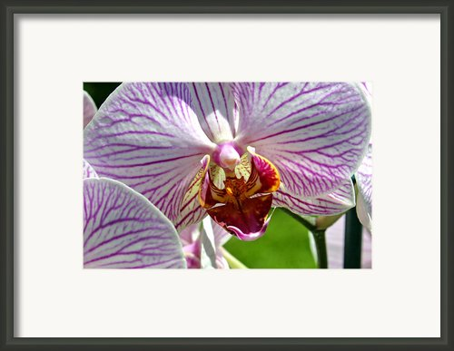 Orchid Flower Framed Print By C Ribet